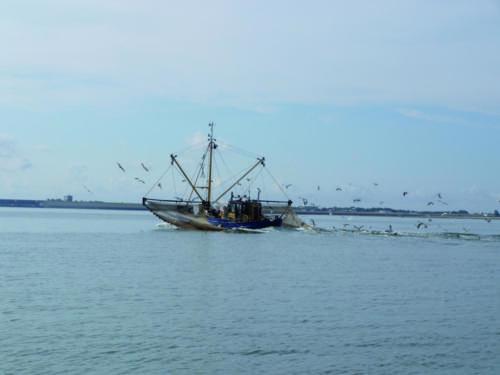 Waddenzee visser